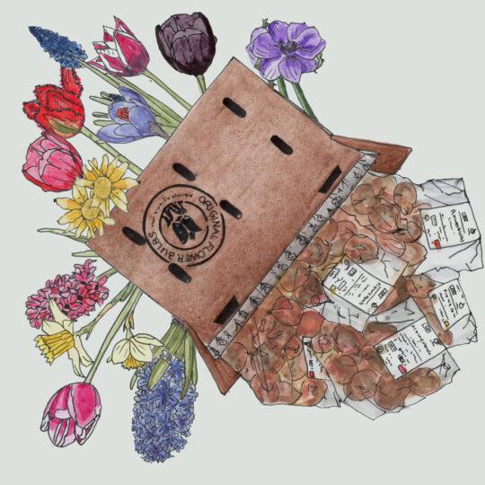 extravagant_bloembollenpakket
