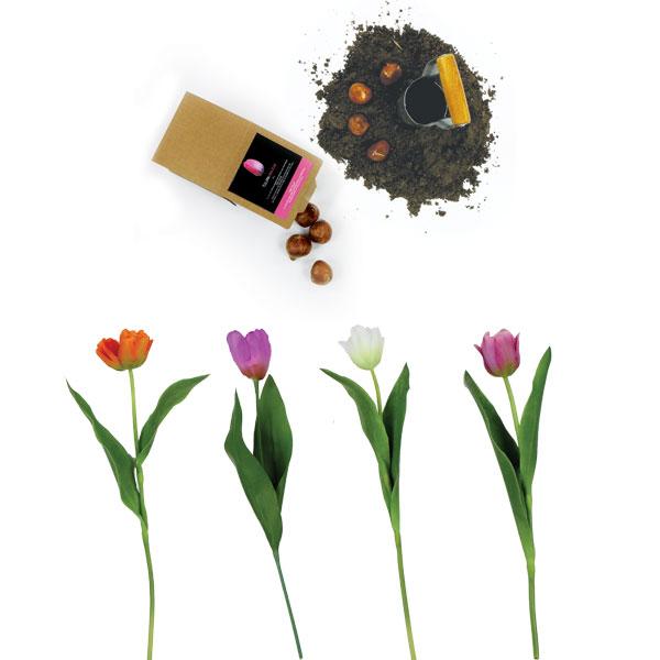 tuinkist met bloembollen