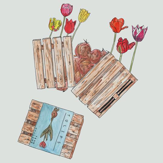 houten palletkist met bloembollen