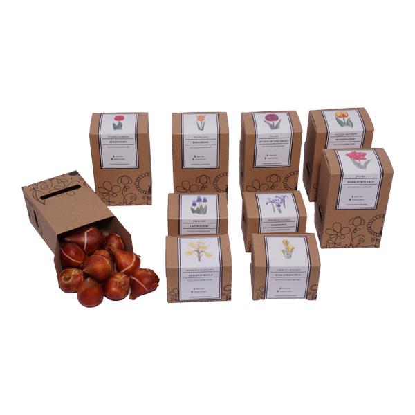 Bloembollenpakket Kraft 2