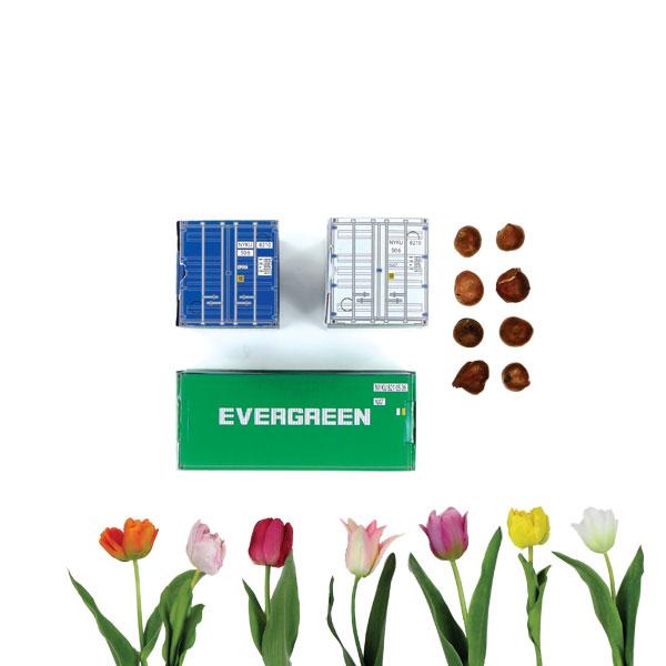 mini container met bloembollen
