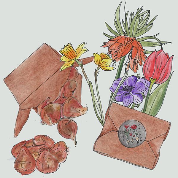 kraft noodle doosje met bloembollen