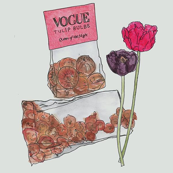 bloembollen in transparante zakjes met fullcolour kaart