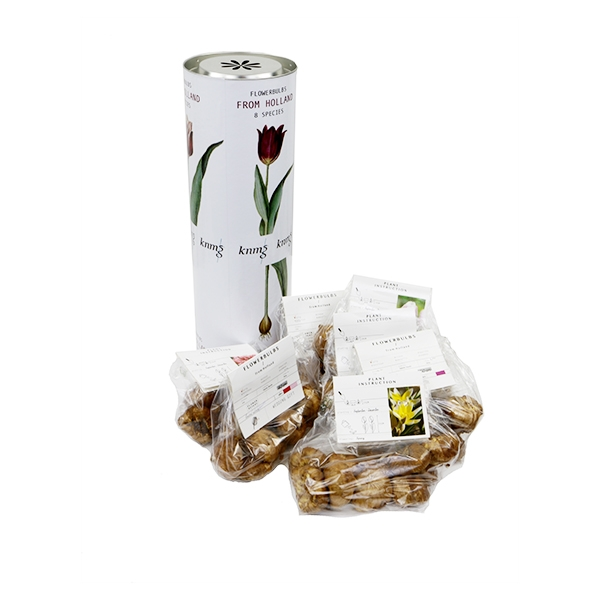 koker xl met 8 x 10 tulpen