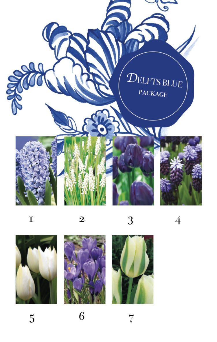 bloembollenpakket Delfts Blauw