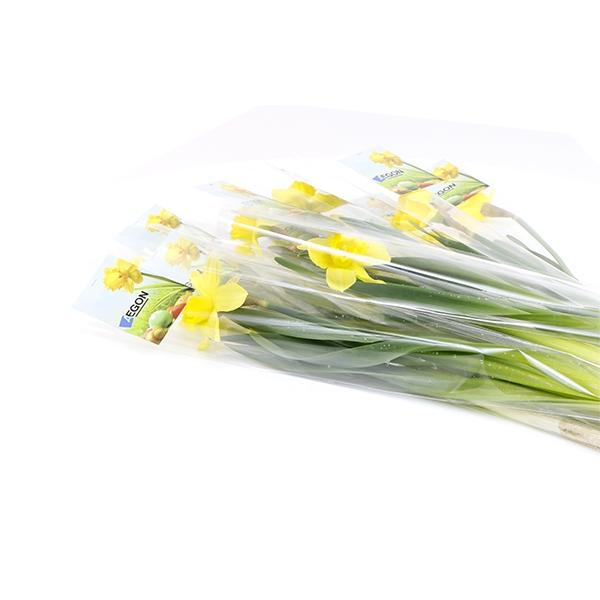 bloeiende narcis