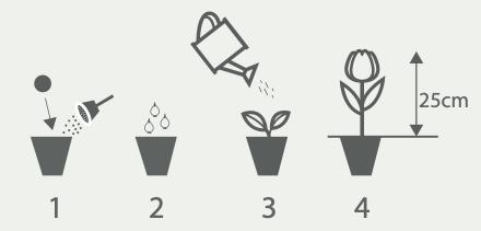 Thoolen bloembollengeschenken en giveaways plantinstructies